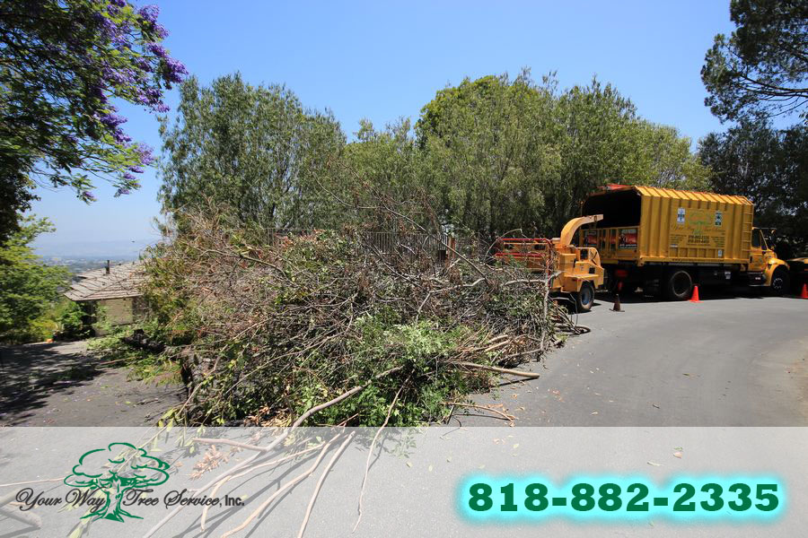Find the Right Local Tree Service in Brentwood