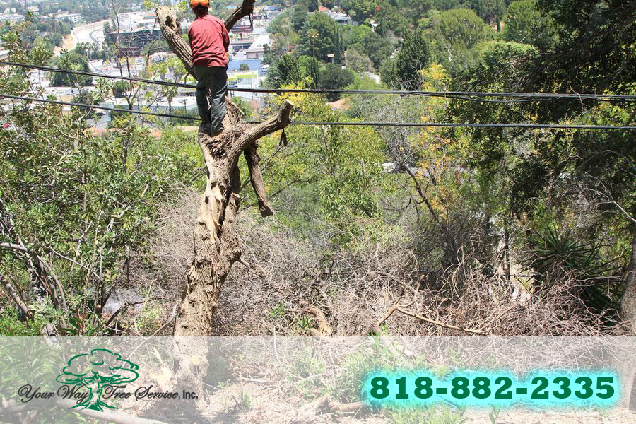 Our Expert Service for Tree Trimming in Brentwood