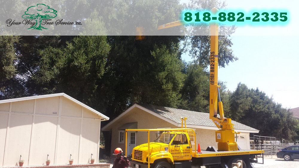 Tree Service in West Hills