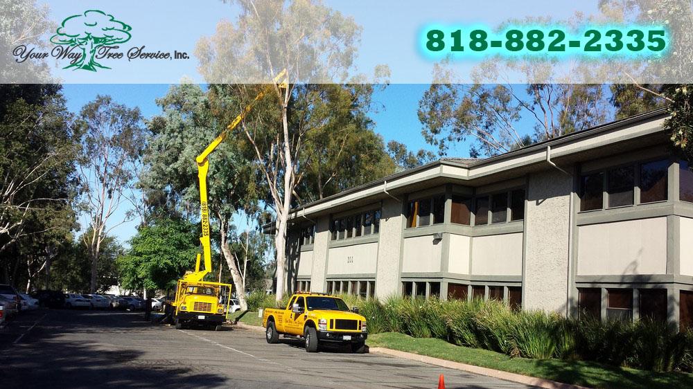 Tree Service in West Hills