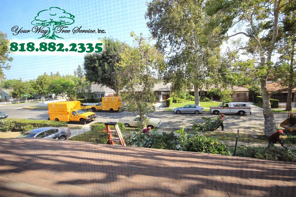We Can Take Care of Your Tree Removal in Thousand Oaks
