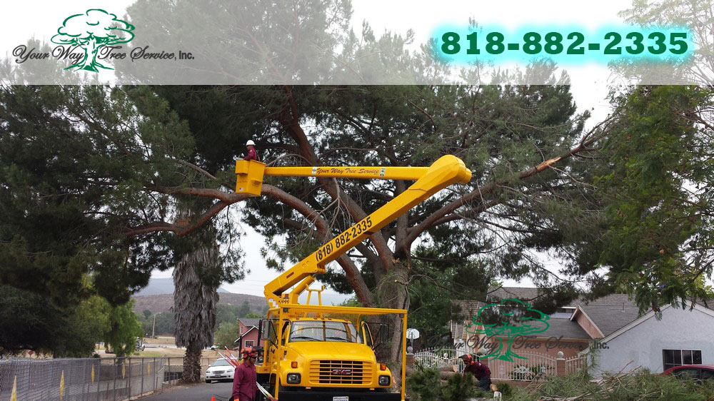 What Factors into the Costs of Tree Trimming in Sherman Oaks