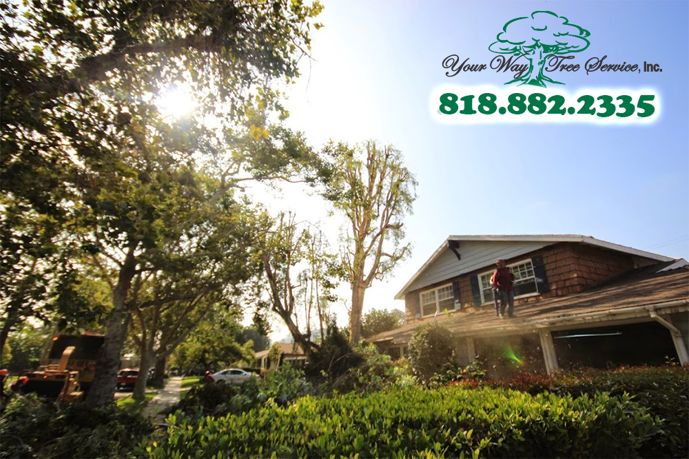 When You Have Damaged Trees, Call Us for Tree Removal in Beverly Hills