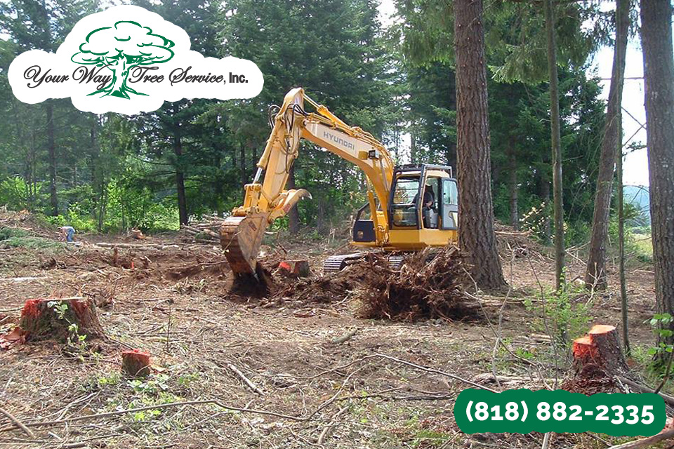 As a Homeowner, Opt for a Tree Service in Valley Village