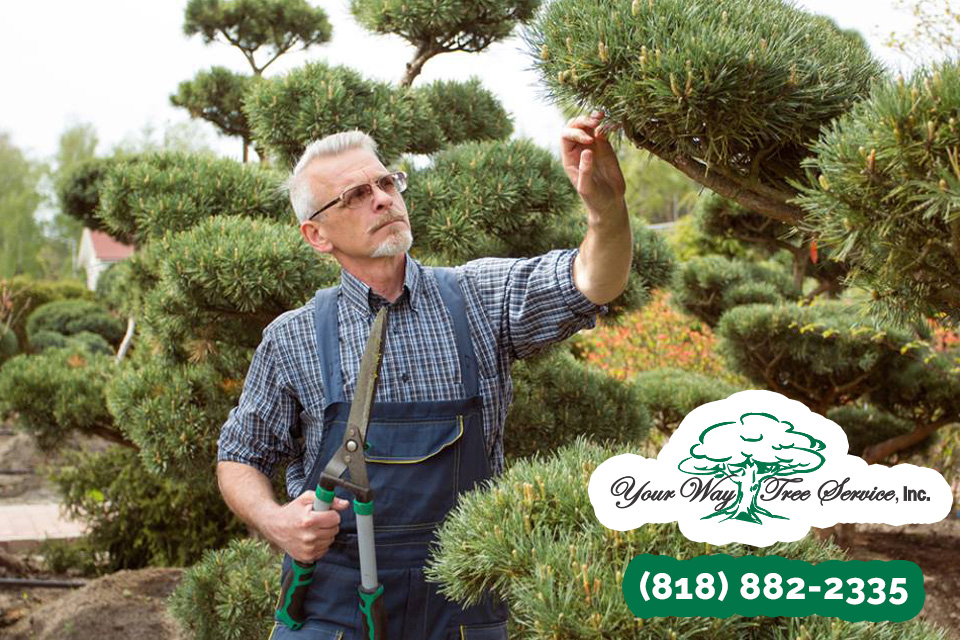 Common Tree Trimming Services in Pacific Palisades