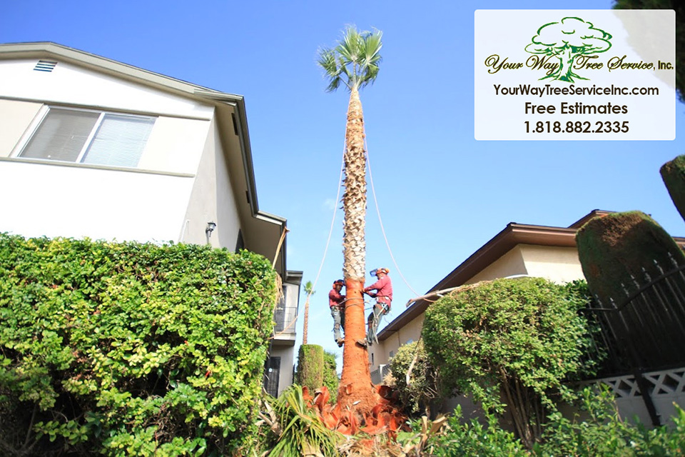 Professional Tree Removal in Hidden Hills