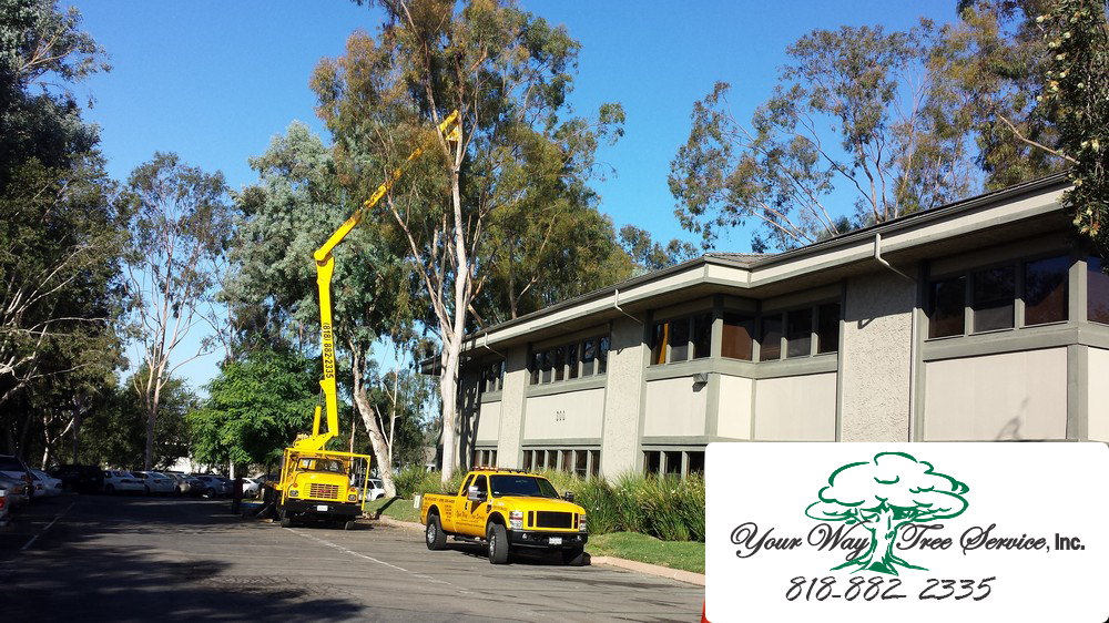 Avoid Disaster with Professional Tree Removal in Santa Monica