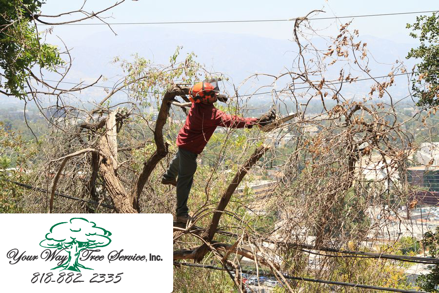 The Benefits of Tree Removal in Hidden Hills