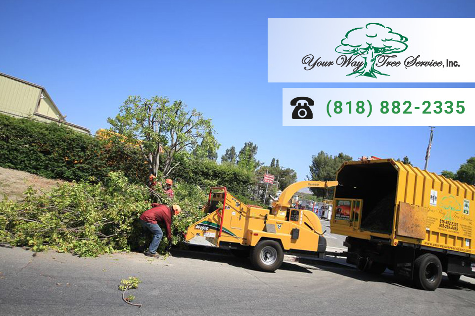 The Best Tree Service in Beverly Hills