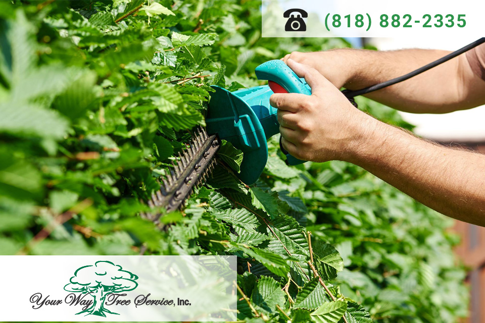 The Best Tree Trimming Service in Brentwood