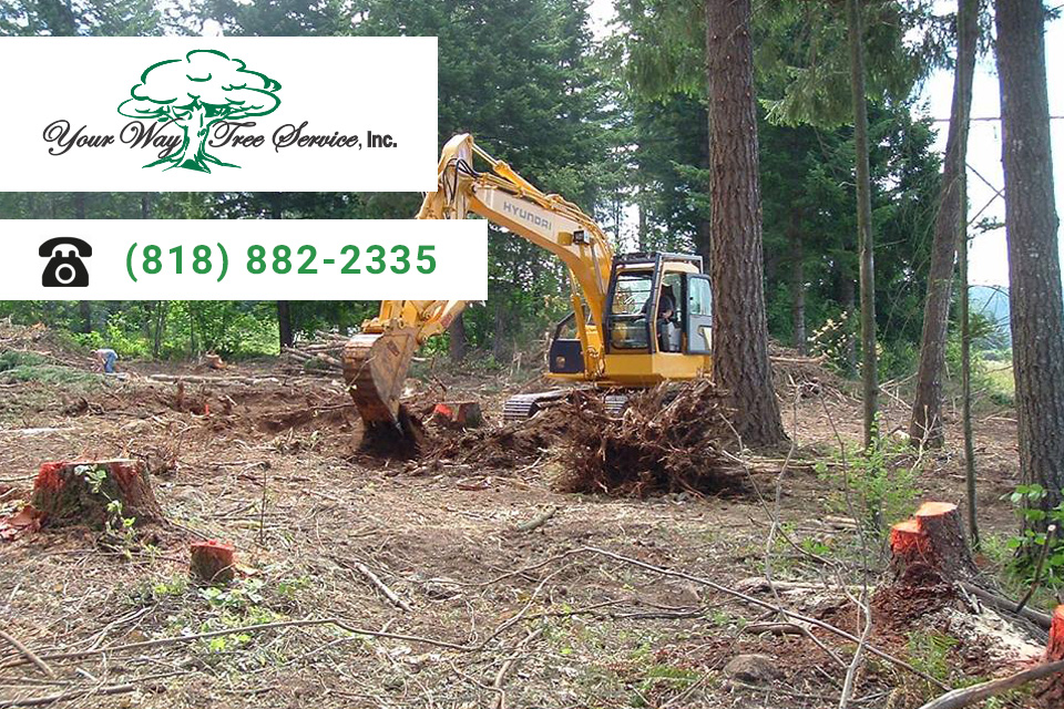 Why Trusted Professionals are a Must for Safe Tree Removal and Stump Grinding
