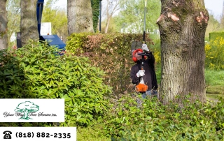 Maintain Your Property with Our Tree Service in Sherman Oaks