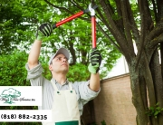 Shape Your Tree with Our Professional Tree Service in Beverly Hills