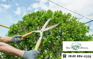 Tidy Up Your Yard with Professional Tree Trimming In Bel-Air