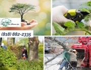 Understand the Truth about Tree Trimming in Van Nuys