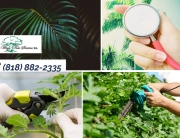 Get Tree Trimming in Northridge to Care for Your Property