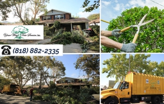 Know What is Involved in Tree Removal in the San Fernando Valley