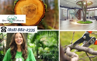 Why You May Need Tree Removal in Calabasas