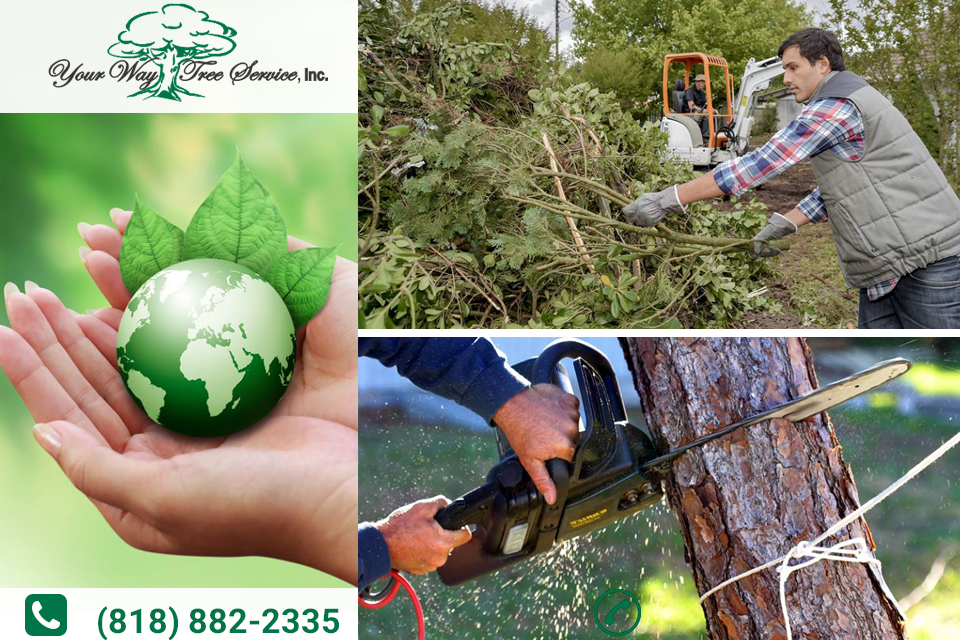 Follow These Tips for Proper Tree Removal in Encino