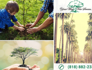Why You Need Tree Removal Services in Beverly Hills