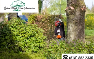 Affordable,-Effective-Tree-Removal-in-Sherman-Oaks