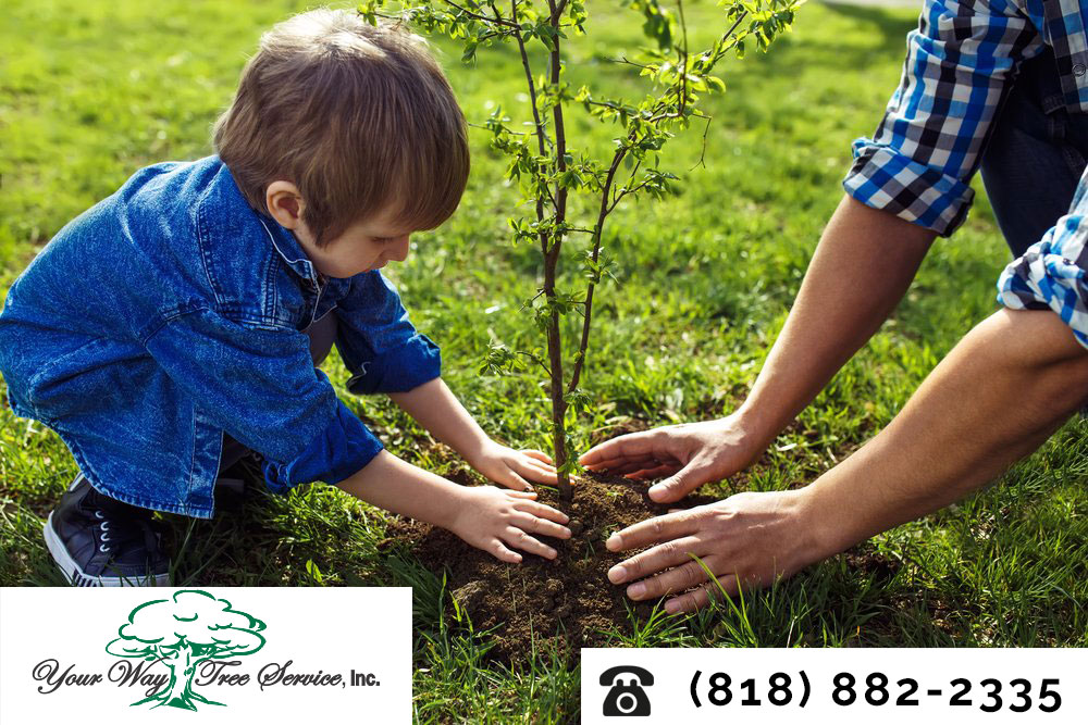 Beautify Your Property with Tree Removal and Stump Grinding