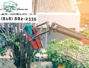 Experience Matters During Tree Removal in Newbury Park