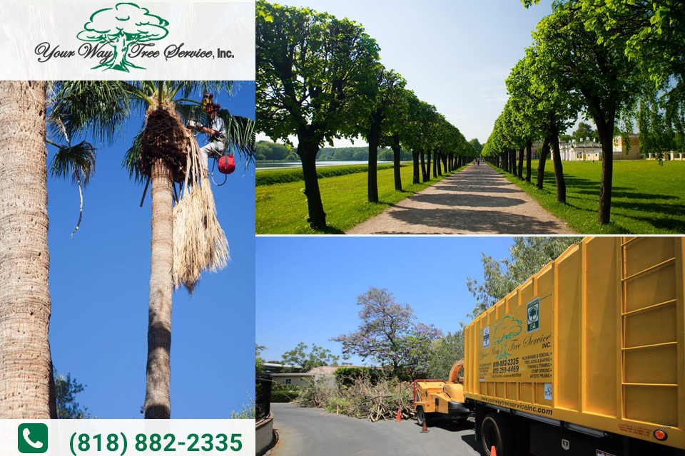 Get Tree Trimming in Agoura Hills from a Licensed Company