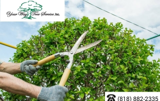 The-Difference-Between-Tree-Pruning-and-Tree-Trimming-in-Bel-Air