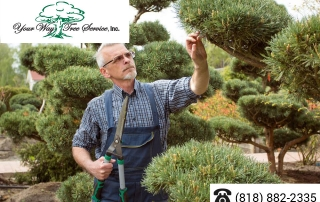 Care-for-Your-Trees-with-a-Local-Tree-Service-in-Sherman-Oaks