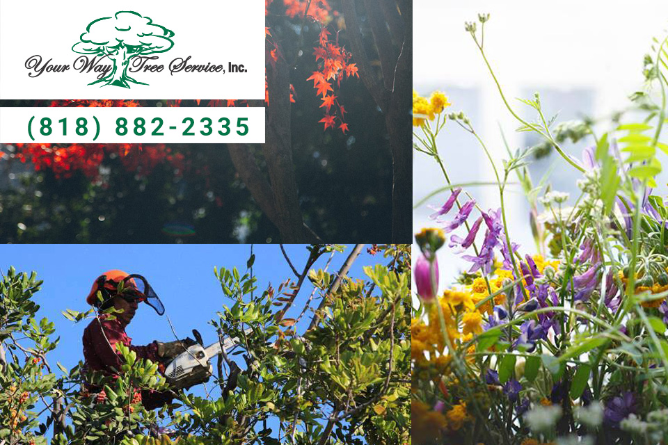 Why-Homeowners-Use-a-Tree-Service-in-Reseda
