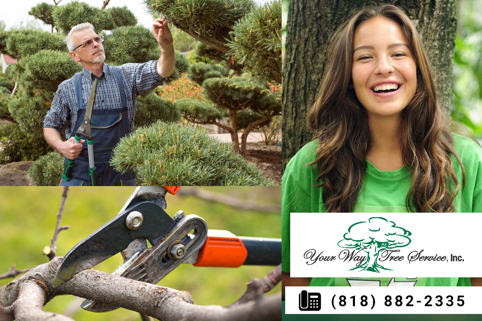 Choosing-a-Professional-Tree-Service-in-Hidden-Hills