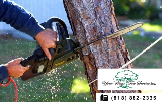 Your Property Can Benefit from Tree Trimming in Newbury Park