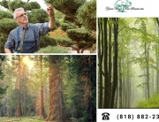 Save-Time-and-Money-and-Get-Professional-Tree-Trimming-in-Los-Angeles