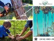 Treat-Your-Sick-Trees-with-the-Help-of-a-Tree-Service-in-Calabasas