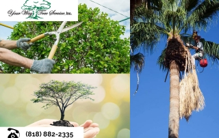 Caring-for-Your-Fruit-Trees-with-Tree-Trimming-in-the-San-Fernando-Valley