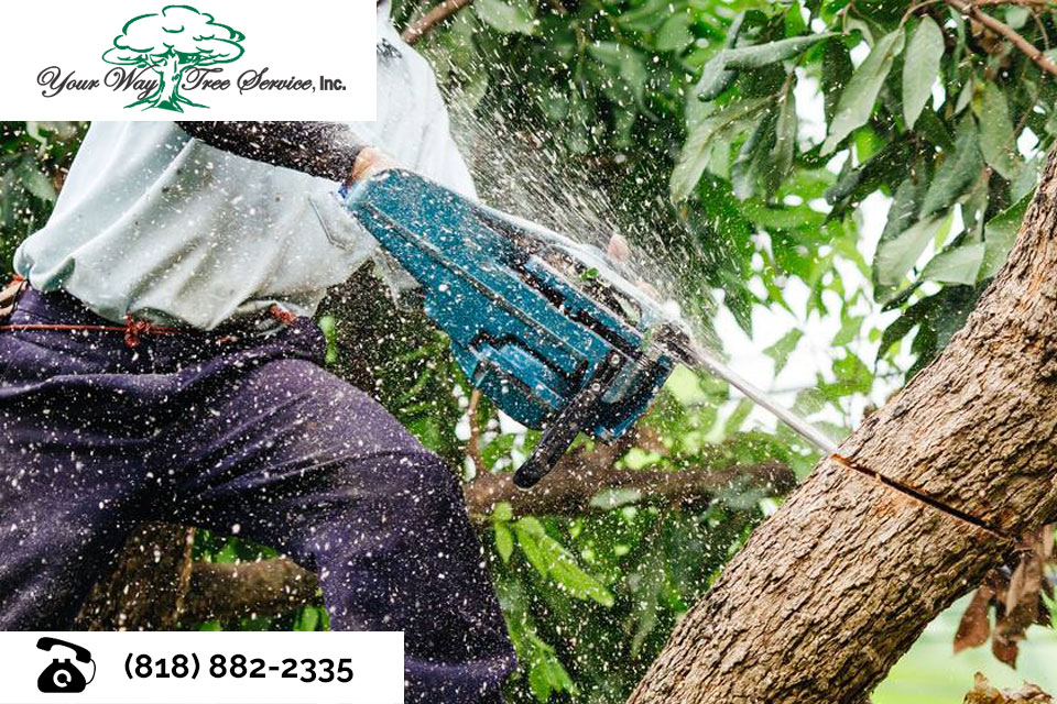 The-Benefits-of-Professional-Tree-Removal-in-Northridge
