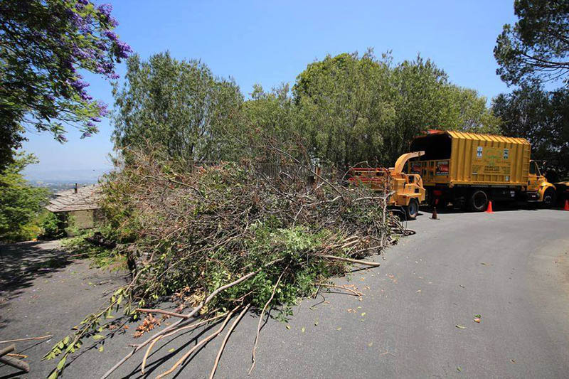 Easy Tree Removal in Woodland Hills
