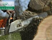 Local Tree Service in Calabasas