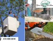 Hire a Tree Trimming Service in the San Fernando Valley