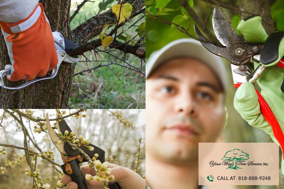 professional Tree Trimming in Sherman Oaks