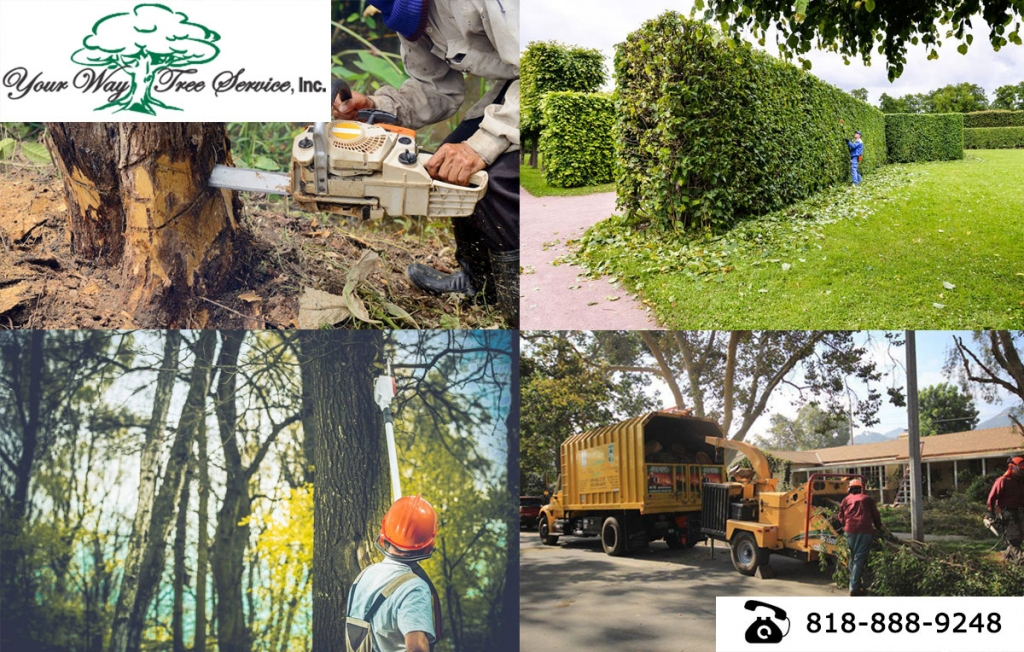 good Tree Removal Calabasas