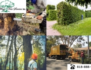 good Tree Removal Calabasas