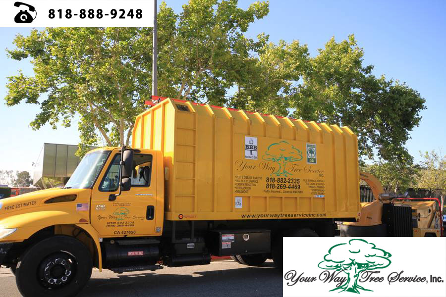 good Tree Service Contractor in Hidden Hills