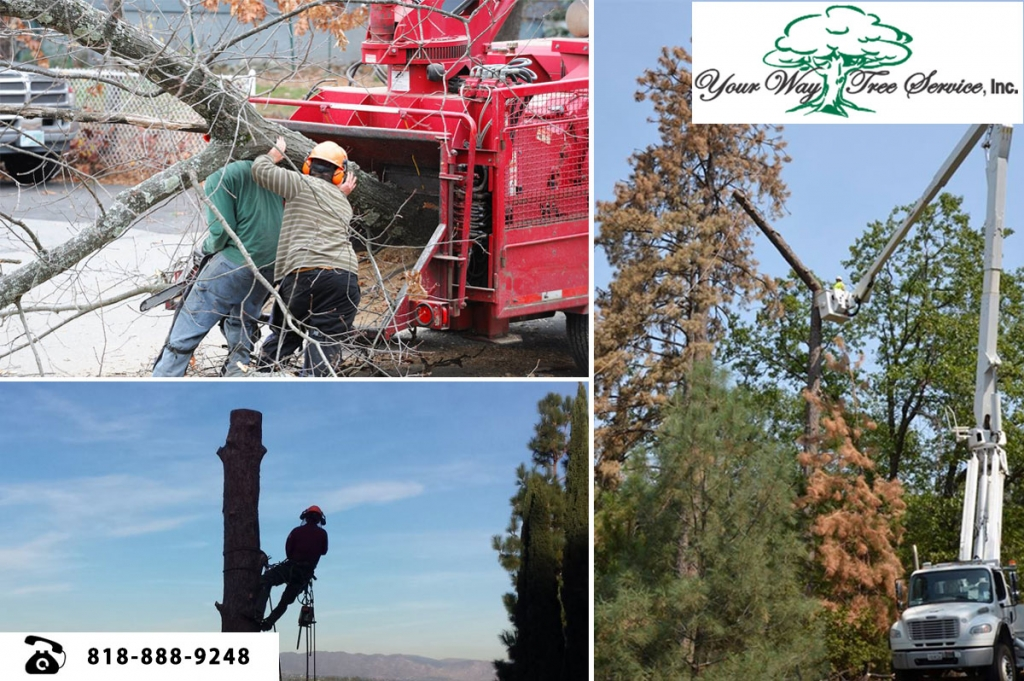 tree removal services in Calabasas