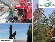 good Tree Service Contractor in Hidden Hills