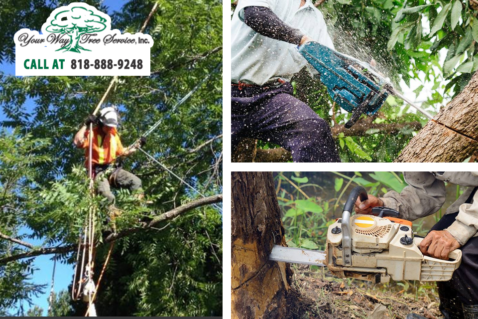 Choose the Right Local Tree Service in Calabasas