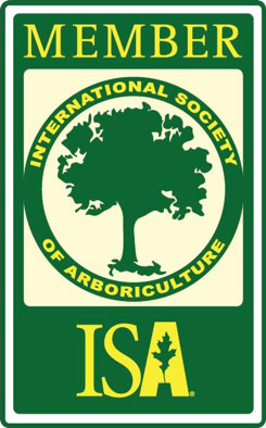 ISA member tree trimming