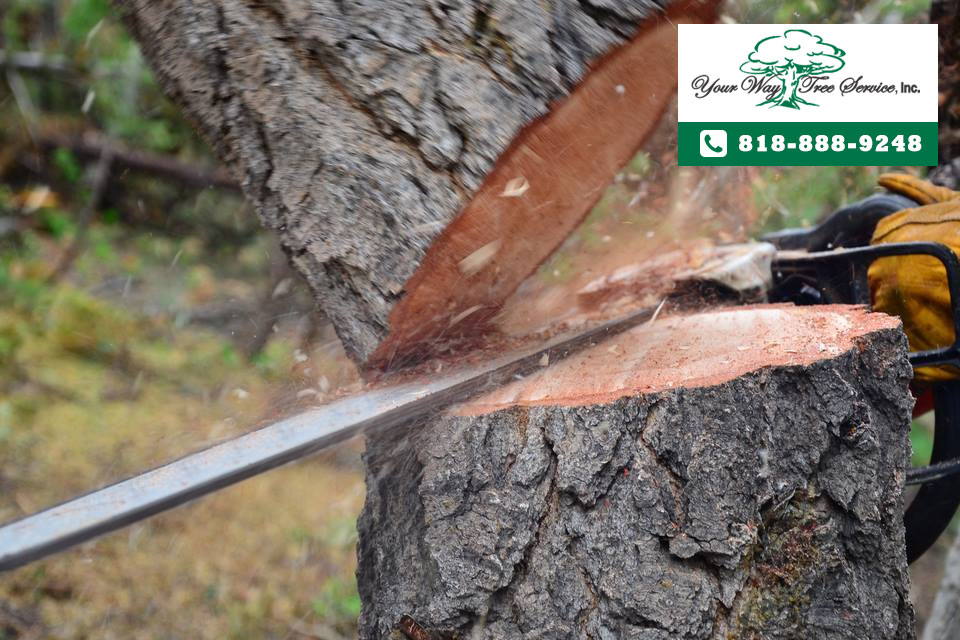 professional tree removal services in Calabasas