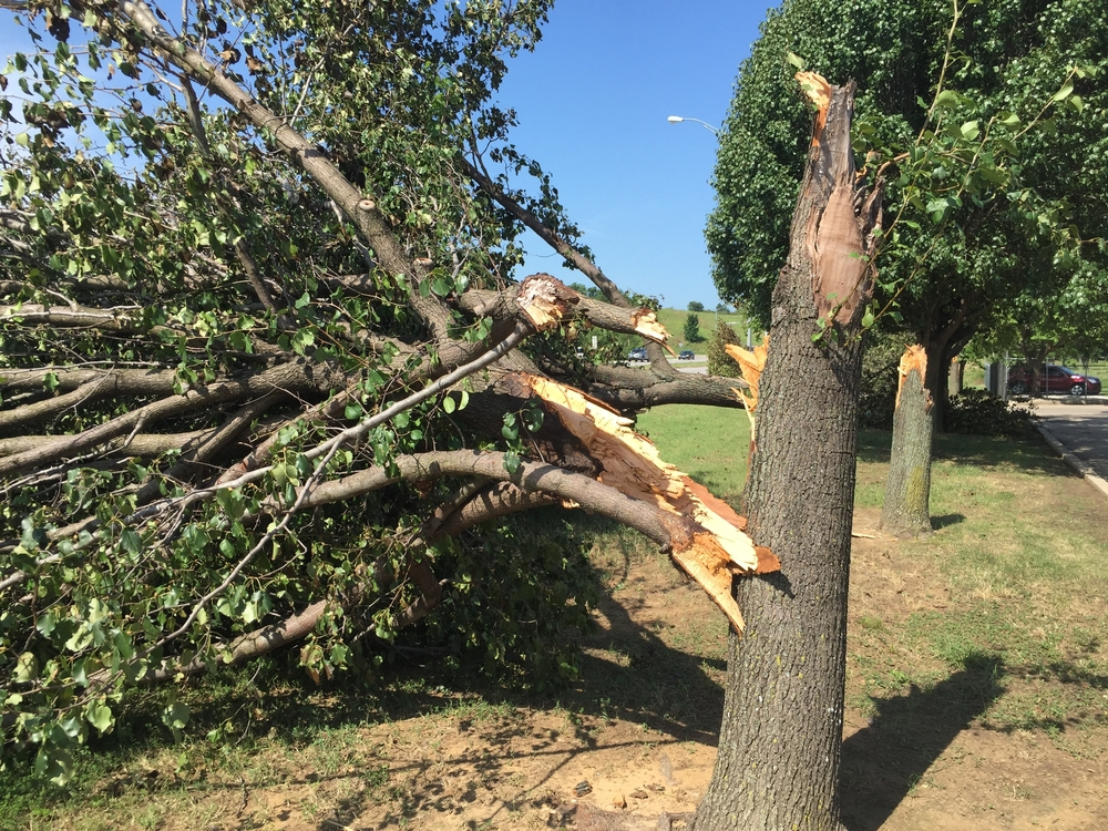 professional-tree-removal-service-in-sherman-oaks